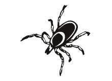 bedbug-thumb